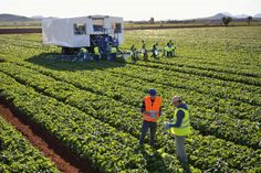 La empresa Agroherni formará parte del grueso de empresas murcianas que expondrán en Fruit Attraction