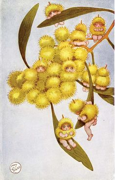 """Wattle Babies"", Sydney: Angus Robertson Illustrations by Australian May Gibbs. These may be ""wattle babies"" to you, but to me they're gumnut fairies! Snugglepot and Cuddlepie were the names of the two main characters. Vintage Fairies, Vintage Art, Flower Fairies, Fairy Art, Australian Artists, Children's Book Illustration, Mellow Yellow, Faeries, Illustrators"