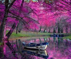 A glorious burst of color, Romania