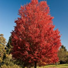 Fall Plant Gardening Tips: Best Plants - Southern Living