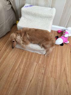 DaiseyMae sleeping on her step