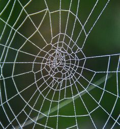 autumn webs glistening with dew drops