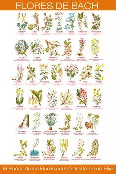 Flores de Bach de NATURSET