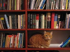 The World's Most Famous Library Cat  -   Dewey Readmore Books hard at work as the library cat.