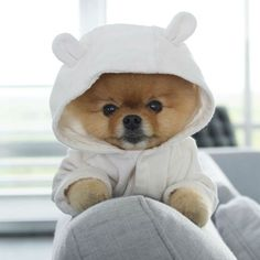 Cute Animals Wallpapers For Desktop such Cute Animals Full Hd Wallpapers every Cute Baby Animals Images Free it is Cute Animals Pictures With Sayings. Teacup Pomeranian Puppy, Cute Teacup Puppies, Super Cute Puppies, Baby Animals Super Cute, Cute Baby Dogs, Cute Little Puppies, Cute Dogs And Puppies, Cute Little Animals, Cute Funny Animals