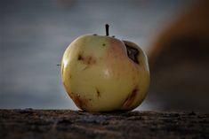 Skjønnheten skal vel komme innenfra? San, Apple, Fruit, Food, Blogging, Apple Fruit, Essen, Meals, Yemek
