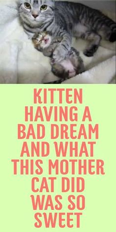 Kitten Having A Bad Dream And What This Mother Cat Did Was So Sweet! <3