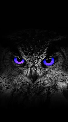 Owl Wallpaper Iphone, Owl Tattoo Drawings, Owl Artwork, Hd Cool Wallpapers, Scratchboard Art, Owl Tattoo Design, Owl Eyes, Owl Pictures, Curious Creatures