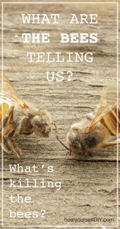 What are the Bees Telling us? What's killing them?   www.healyourselfdiy.com