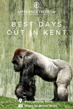 Best days out in Kent: Scenic landscapes, wildlife watching and a chance to relax. Here are our top picks to do in what's often described as The Garden of England. Glamping Uk, Glamping Holidays, Site Down, Mountain Hiking, Days Out, The Great Outdoors, Things To Do, Freedom, Landscapes