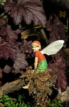 i am going to put fairies in my garden