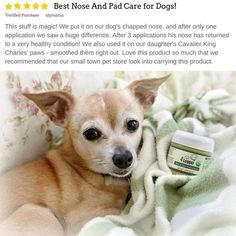 Certified Organic Healing Balm for Dog Nose and Paw Pads Wound Healing, Healing Herbs, Scar Reduction, Natural Vitamin E, Dog Nose, Natural Sunscreen, Natural Preservatives, Your Dog, The Balm