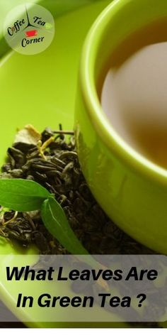 What Leaves Are In Green Tea ? (What Your Fave Tea Is Made Of) Green Tea Uses, Pure Green Tea, Best Green Tea, Best Tea, Oolong Tea, Chinese Greens, Chinese Tea, Tea Plant