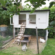 Lovade ju visa kaninburen idag, here it is! Och Moa & Ville ser ut som frågetecken -Hallå vad gör du!? Mata oss! #kaninbur
