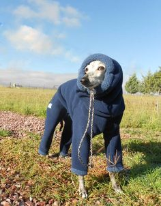 Polar Suit Winter Wear for Italian Greyhounds and Small Dogs with attached snood-made 2 measure in 4 colors