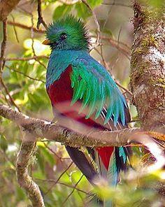 Quetzel, Costa Rica