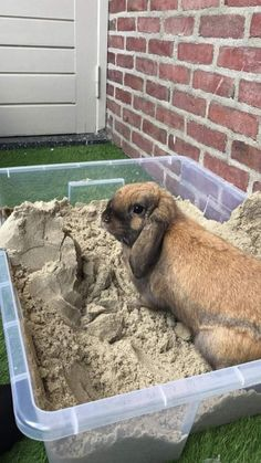 I wonder if they would like sand. Rabbit Shed, House Rabbit, Rabbit Toys, Pet Rabbit, Bunny Cages, Rabbit Cages, Diy Bunny Toys, Rabbit Habitat, Rabbit Enclosure
