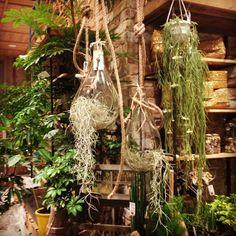 #ShareIG みなとみらい店限定、Green Fingersのハンギンググリーン。#interior  #Design #Architecture #actus #green #airplants #みなとみらい  #インテリア #建築 #アクタス #エアプランツ #観葉植物