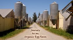 Tour an Organic Egg Farm