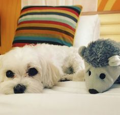 We love welcoming your furry friends to Wild Palms Hotel! Cupertino California, Palms Hotel, Pet Friendly Hotels, Hotel Offers, Boutique, Retro, Friends, Amigos, Retro Illustration