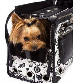 City Girl-Sir Foxalot Pet Carrier