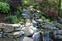 Sleeping With the Fishes in Bethesda MD - traditional - Landscape - Dc Metro - Revolutionary Gardens