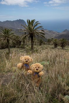 Teddy Bear Images, Teddy Bear Pictures, Love Bear, Wallpaper, Travelling, Teddy Bears, Prints, Animals, Beautiful