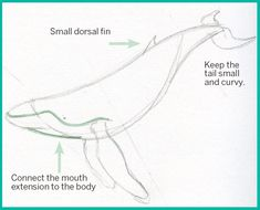 Art Thief: Draw a humpback whale Whale Sketch, Whale Drawing, Sea Creatures Drawing, Watercolor Whale, Underwater Art, Whale Art, Humpback Whale, Whale Sharks, Wale