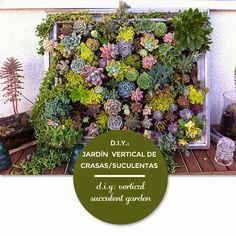 DIY: Jardín vertical de plantas crasas o suculentas · DIY: vertical succulent garden