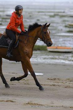 10 conseils pour mettre son cheval en avant