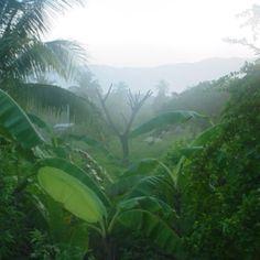 Morning in St. Elizabeth ~ Jamaica