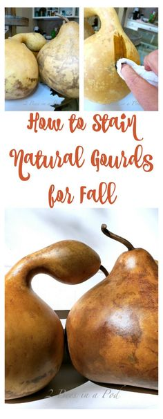 How to Stain Natural Gourds for Fall. - 2 Bees in a Pod How to Stain Natural Gourds for Fall. Nature Crafts, Fall Crafts, Holiday Crafts, Diy And Crafts, Beach Crafts, Summer Crafts, Kid Crafts, Decorative Gourds, Hand Painted Gourds