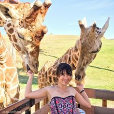 5. Go on a safari. | 18 Things You Didn't Know You Could Do In San Diego