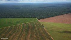 Soja para China, deforestación en Argentina