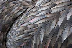 sculpture plume oiseau 10 Des sculptures en plumes