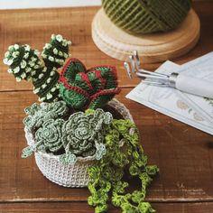Amigurumi – Cactus Collection - Cactus Amigurumi (15) - Free Pattern