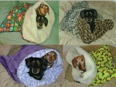 Dachshund Snuggle Bags - by Blissful