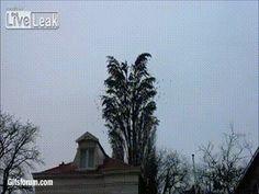 이슈인 - 나무가 쳐졌던 이유