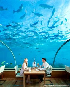 Ithaa undersea restaurant: Set five metres below the surface with 180-degrees of panoramic underwater views, Ithaa (meaning 'pearl' in the Maldivian language of Dihevi) serves contemporary European cuisine in a six-course set menu matched by a wine concept dedicated to Champagne.  Expect indulgences such as caviar and lobster on the menu.  This is a barefoot restaurant so shoes must be removed before entering the restaurant.