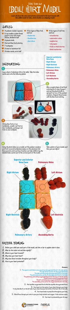 How to make an Edible Heart Model #science #biology
