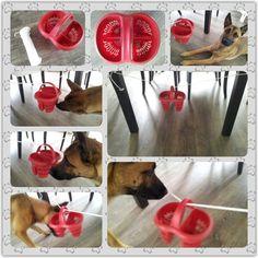 Spel 25 (hondenspel hond spel denkwerk hersenwerk brain dog game play diy) www.facebook.com/denkspellenvoorjehond
