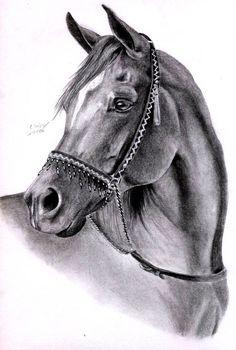 Arabian Horse by ManiaAdun.deviantart.com: