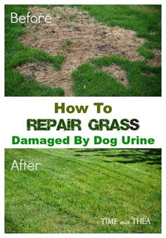 How To Stop Dog Pee From Killing Grass