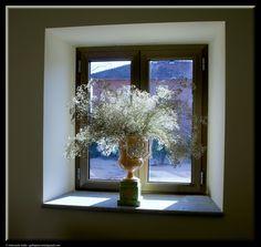 White flowers by Giancarlo Gallo