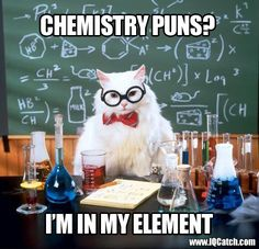 The Professor Cat drops into IQ Catch www.IQCatch.com