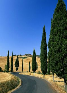 Rolling hills of Tuscany!