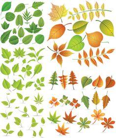 Autumn Leaves Vector Set 2