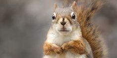 Birds, Squirrels Take Toll On Juneau, Alaska Power Lines