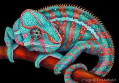 A Chameleon of a Different Color! My Turquoise Blue & Coral Red Panther Chameleon is finished Thanks for watching this piece come to life! Prints and Posters are available in my Etsy Shop: https://www.etsy.com/listing/481566112