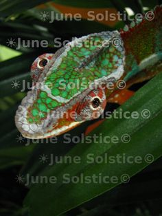 Nature Photography Animal Home Decor Wall Decor by JuneSolstice